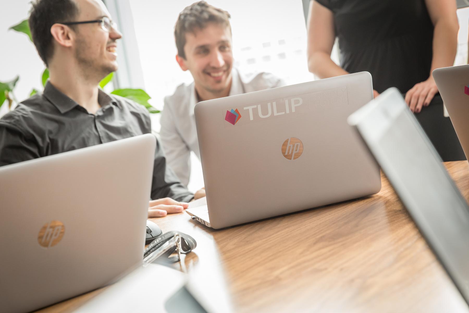 tulip referencie